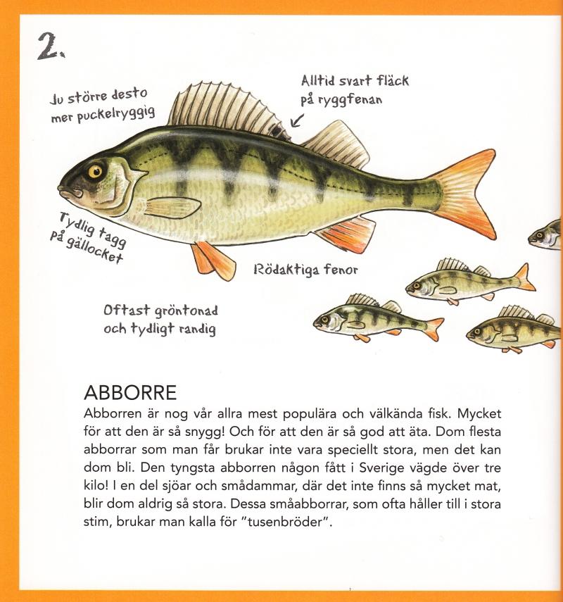 fakta om fisk