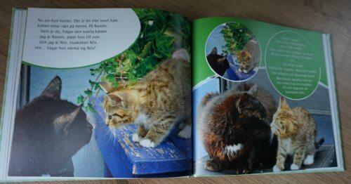 mat för mager kattunge