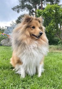 Hunden Sammy
